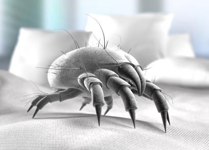 milben beim hund das hilft wirklich. Black Bedroom Furniture Sets. Home Design Ideas