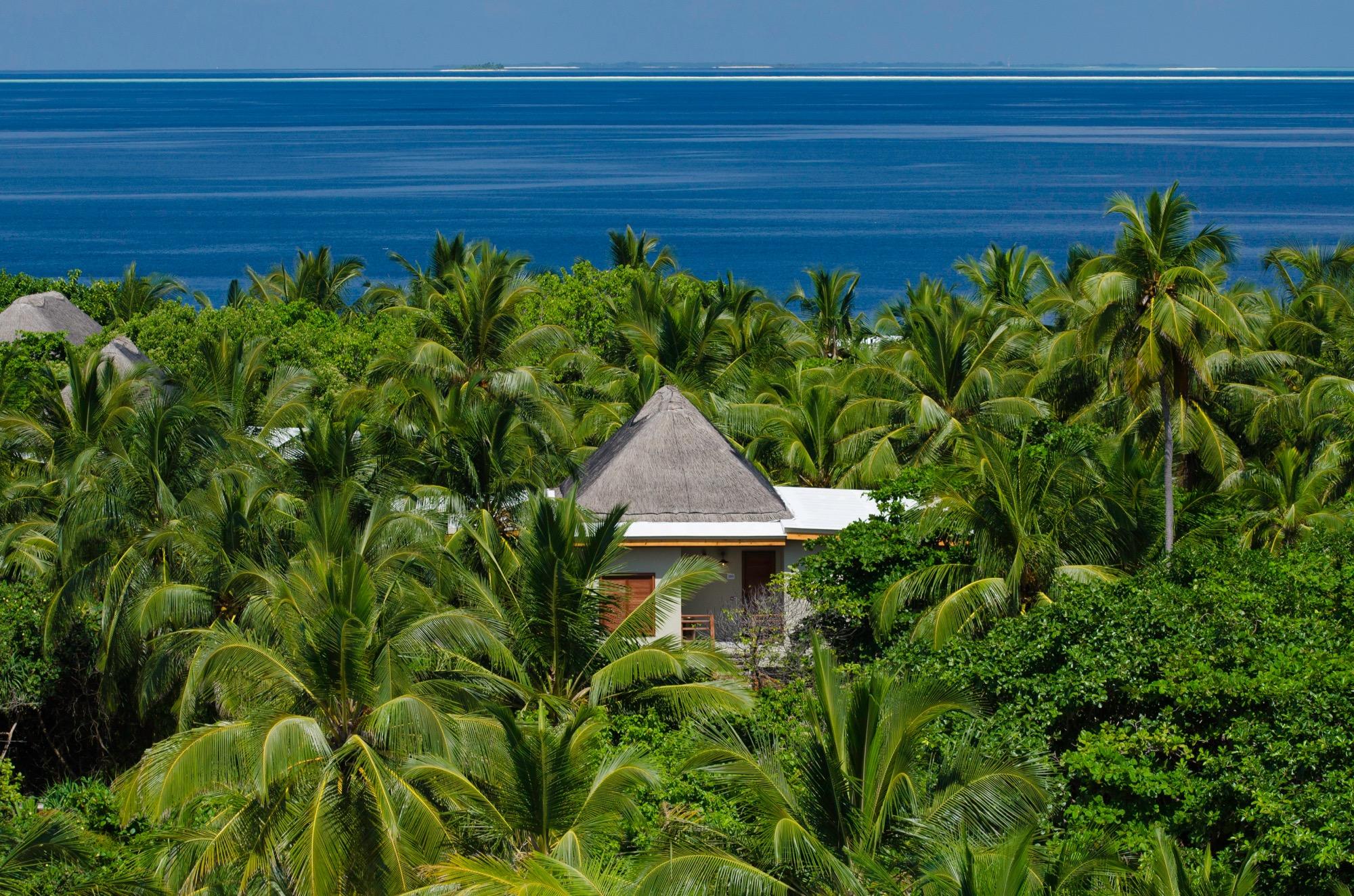Bild zum Wellness-Angebot Treetop Villa