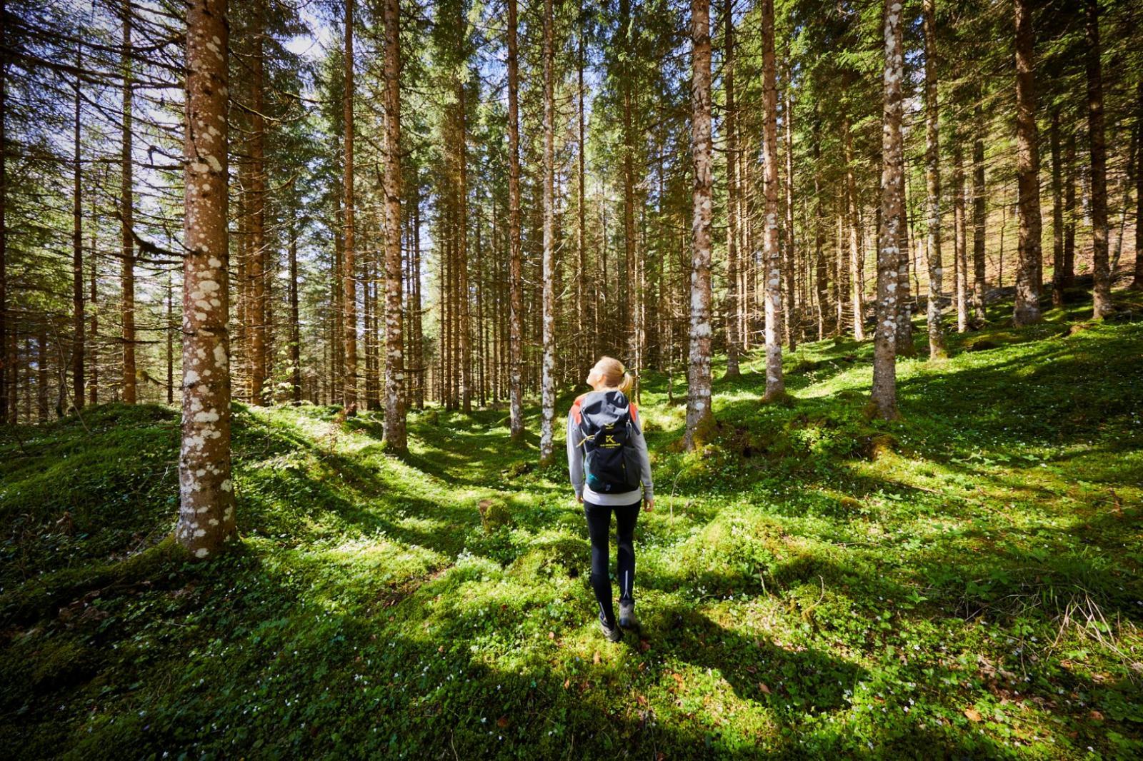 Bild zum Wellness-Angebot Wanderzeit