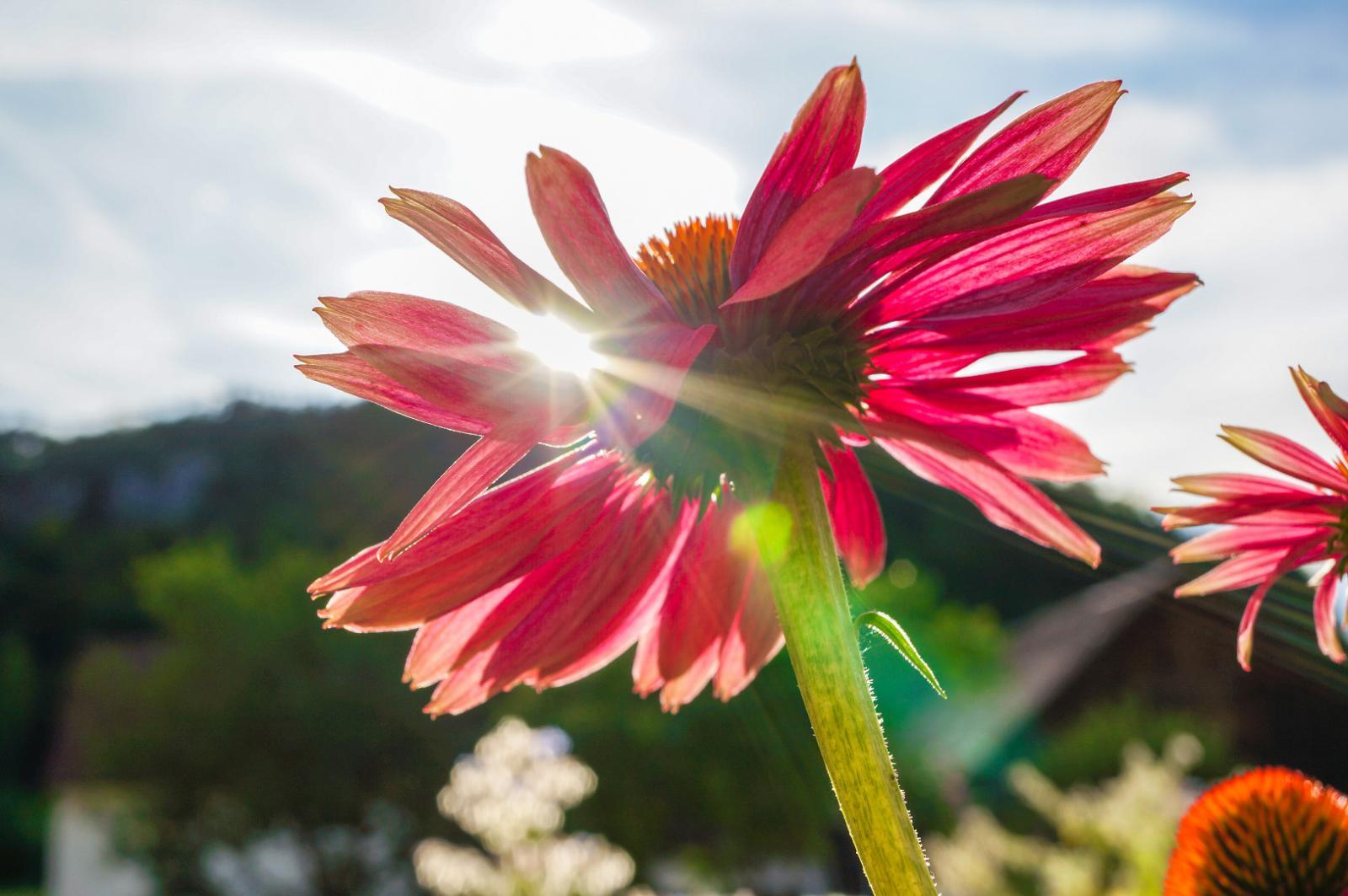 Bild zum Wellness-Angebot Sommersonne in Franken
